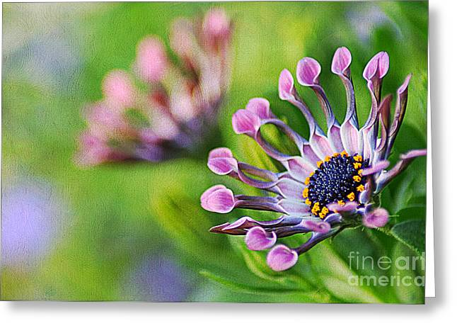 Colors Of Spring Greeting Card by Darren Fisher