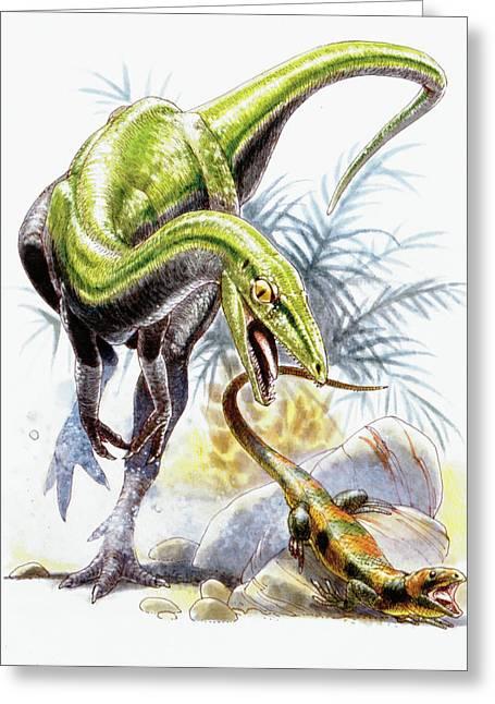 Compsognathus Dinosaur Greeting Card by Deagostini/uig