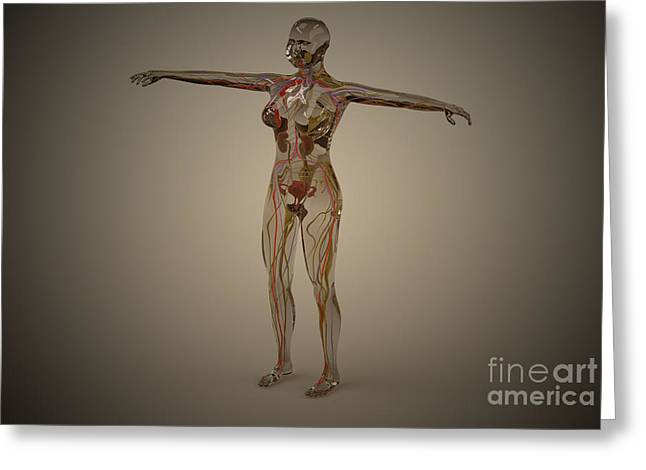 Conceptual Image Of Human Nervous Greeting Card by Stocktrek Images