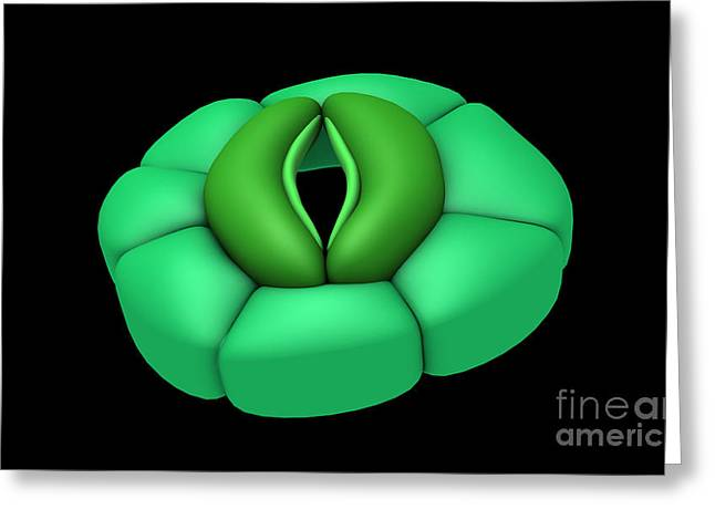 Conceptual Image Of Stomata Greeting Card by Stocktrek Images