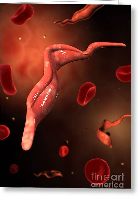 Conceptual Image Of Trypanosoma Greeting Card by Stocktrek Images
