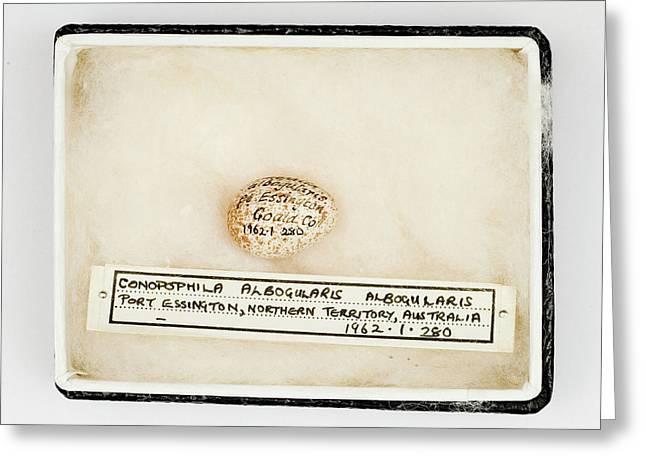 Conopophila Albogularis Egg Greeting Card by Natural History Museum, London