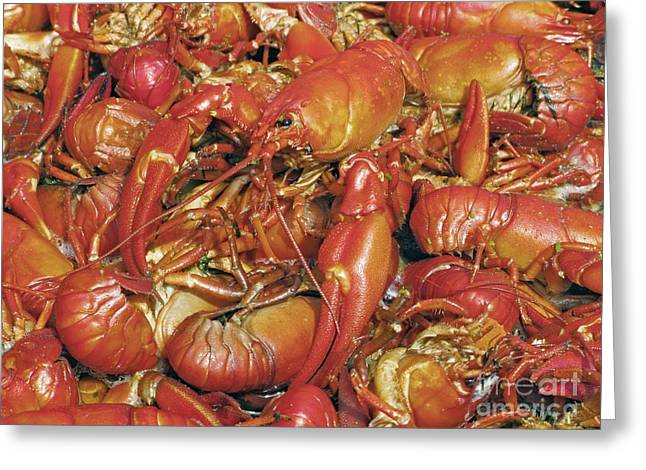Cooked Crayfish Greeting Card