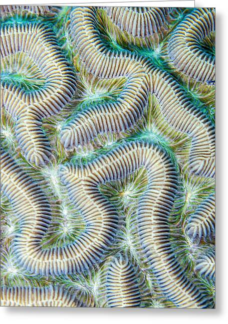 Coral Maze Greeting Card by Jean Noren