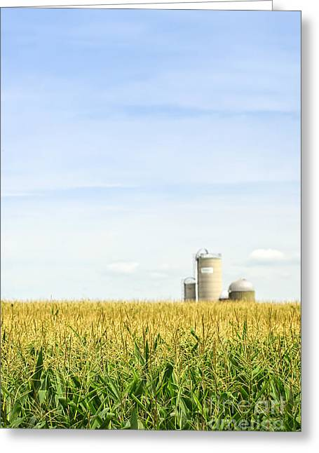 Corn Field With Silos Greeting Card by Elena Elisseeva