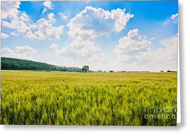 Cornfield In Tuscany Greeting Card