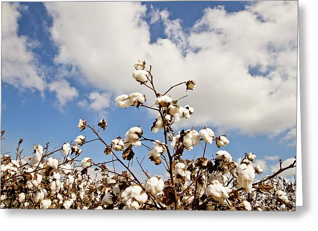 Cotton In The Sky Greeting Card by Scott Pellegrin