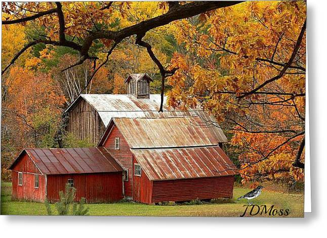 Country Living Greeting Card by Janet Moss