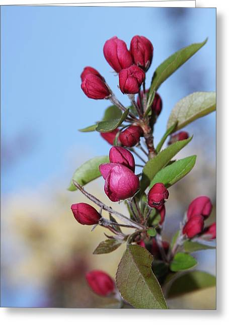 Greeting Card featuring the photograph Crabapple Blossoms by Vadim Levin