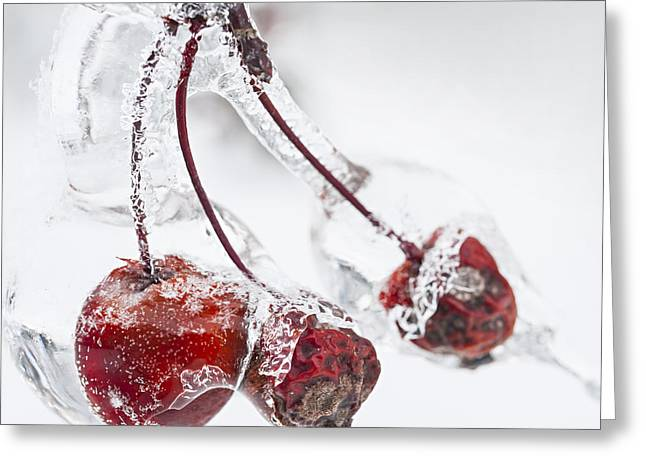 Crab Apples On Icy Branch Greeting Card by Elena Elisseeva