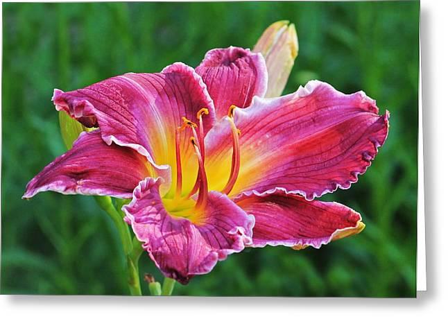 Crimson Day Lily Greeting Card