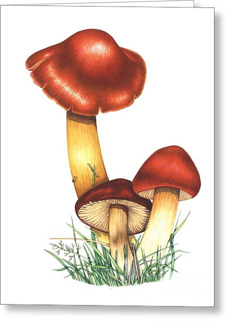 Crimson Waxcap Mushrooms, Artwork Greeting Card