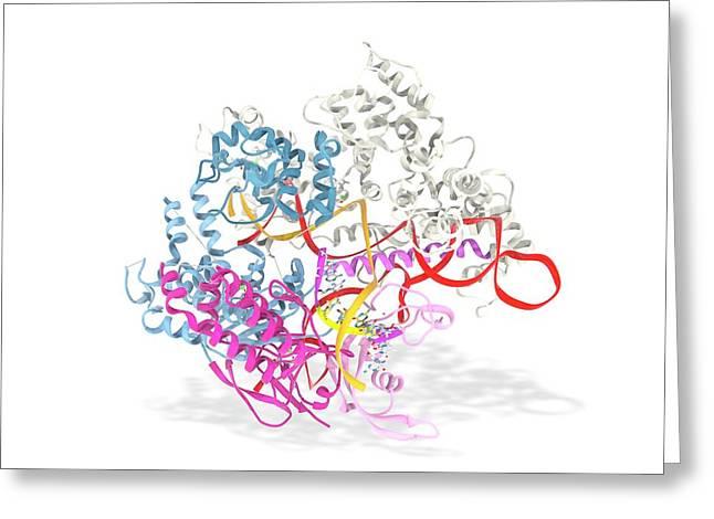Crispr-cas9 Gene Editing Complex Greeting Card by Ramon Andrade 3dciencia