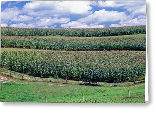 Crop In A Field, Amish Country, Holmes Greeting Card by Panoramic Images