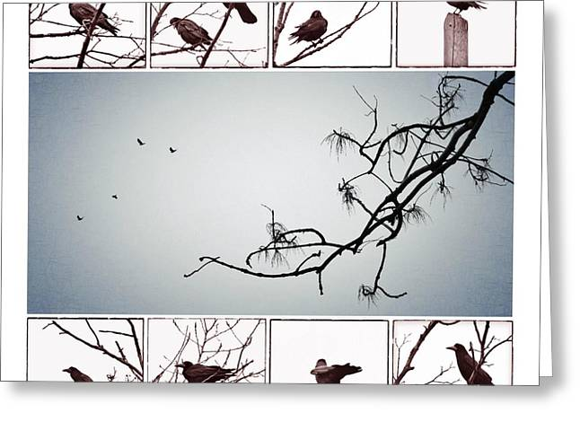 Crows Greeting Card by Marianna Mills