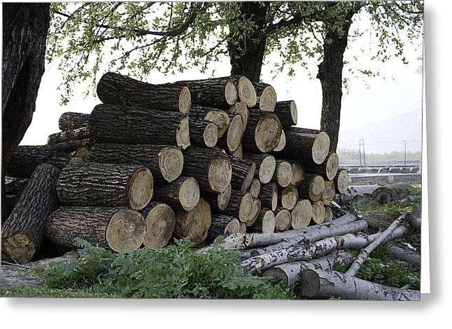 Cut Tree Trunks Piled Up For Further Processing After Logging Greeting Card by Ashish Agarwal