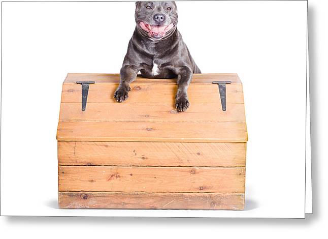 Cute Dog On Vintage Wooden Chest Greeting Card by Jorgo Photography - Wall Art Gallery