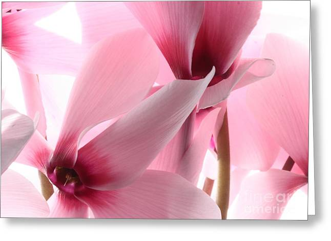 Cyclamen Greeting Card