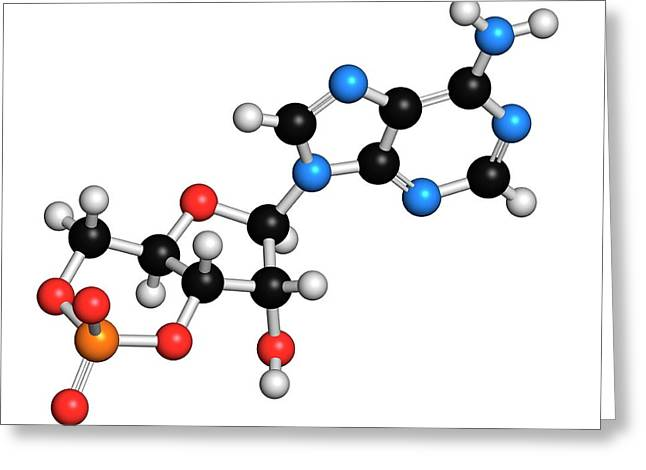 Cyclic Adenosine Monophosphate Molecule Greeting Card by Molekuul