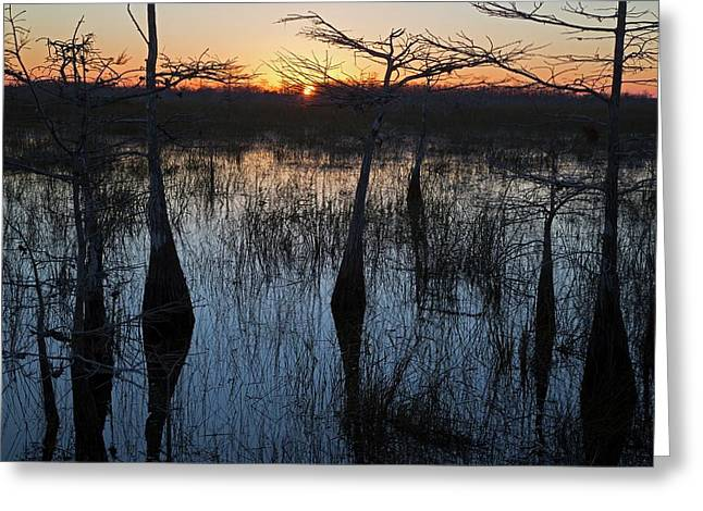 Cypress Swamp At Sunrise Greeting Card by Jim West
