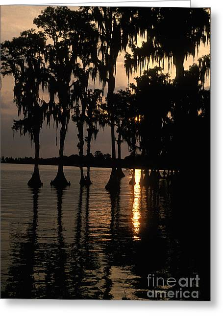 Cypress Swamp Greeting Card by Ron Sanford