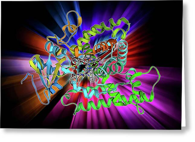 Cytochrome P450 And Fluconazole Greeting Card