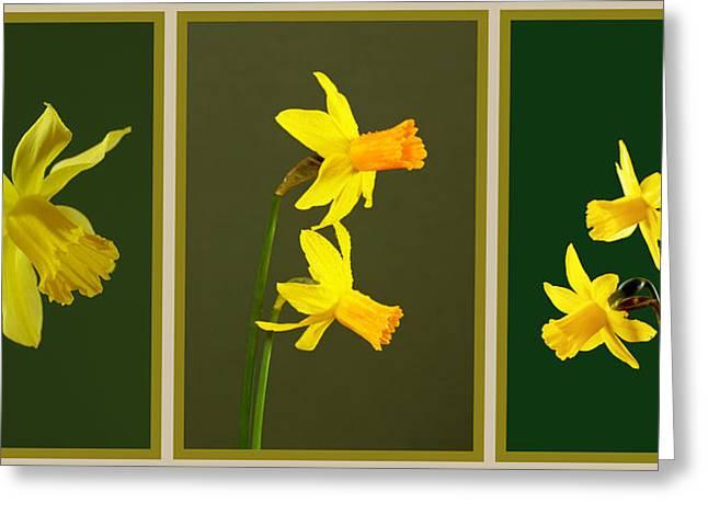 Daffodil Triptych Greeting Card by Pete Hemington
