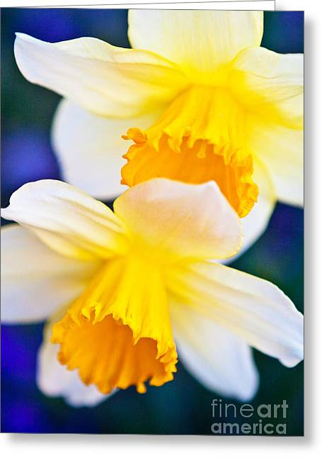 Greeting Card featuring the photograph Daffodils by Roselynne Broussard