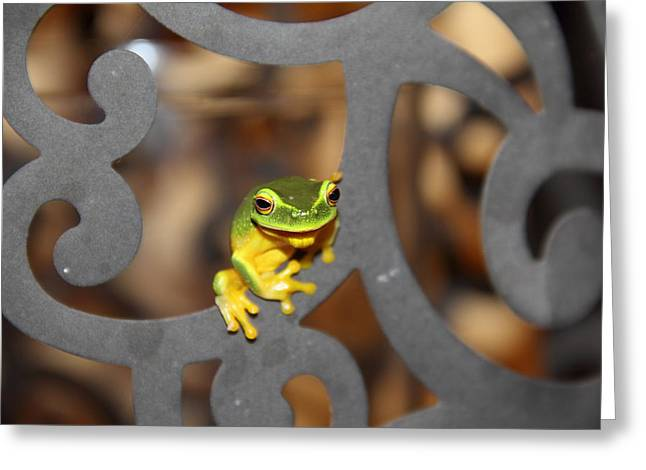 Greeting Card featuring the photograph Dainty Tree Frog by Debbie Cundy