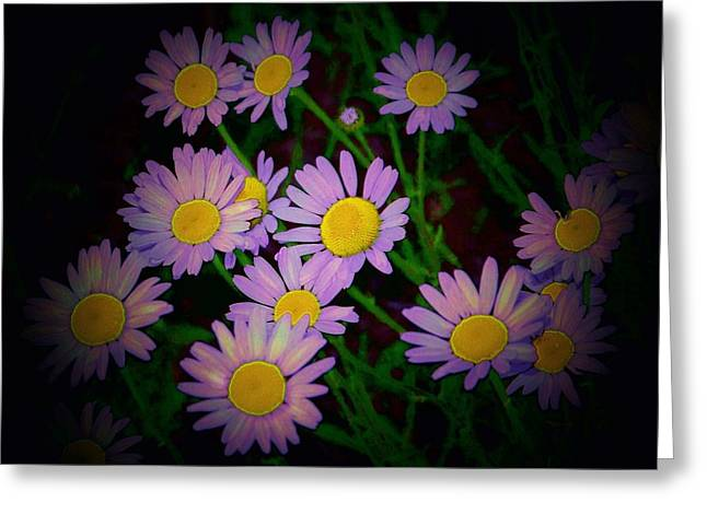 Daisies I Greeting Card by Shirley Moravec