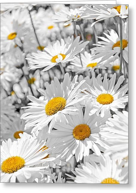 Daisies In Garden Greeting Card by Elena Elisseeva