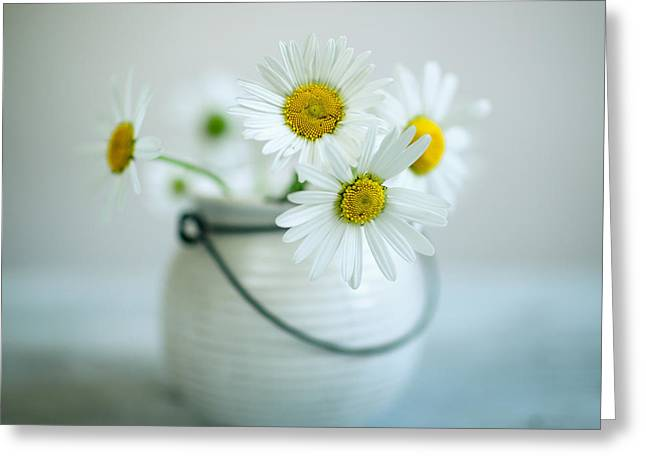 Daisy Flowers Greeting Card by Nailia Schwarz