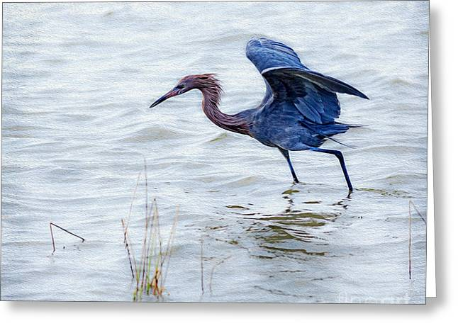 Dancing Egret Greeting Card by Louise Heusinkveld