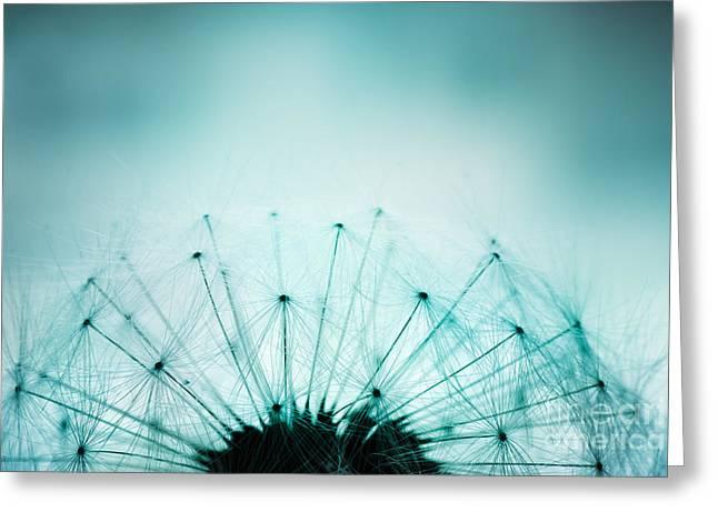 Dandelion Seeds Greeting Card by Mythja  Photography