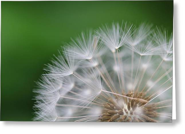 Dandelion Greeting Card by Tilen Hrovatic