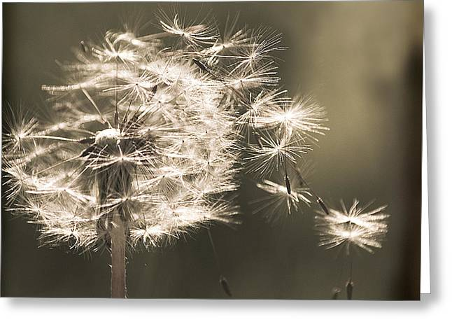Greeting Card featuring the photograph Dandelion by Yulia Kazansky