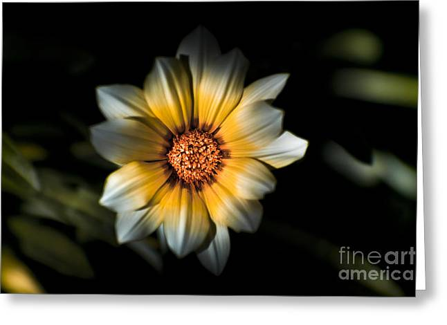 Dark Daisy Flower Greeting Card