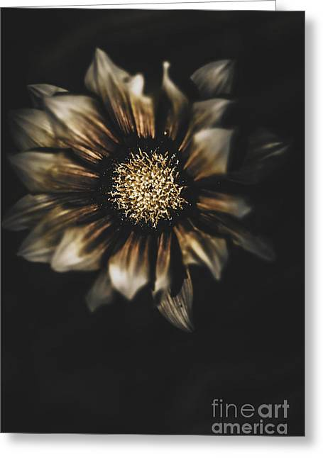 Dark Grave Flower By Tomb In Darkness Greeting Card by Jorgo Photography - Wall Art Gallery