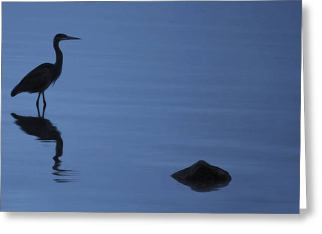 Dark Heron Greeting Card