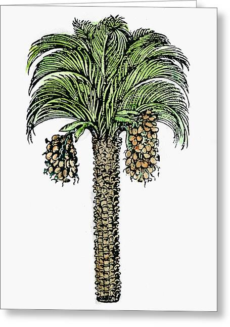 Date Palm, 1579 Greeting Card by Granger