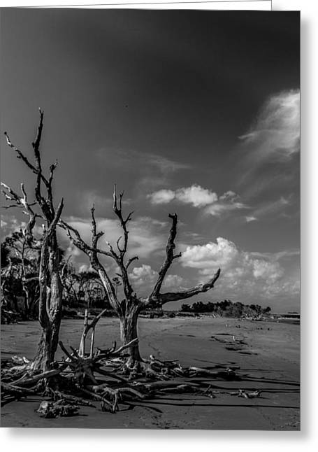 Dead Trees On The Beach Greeting Card