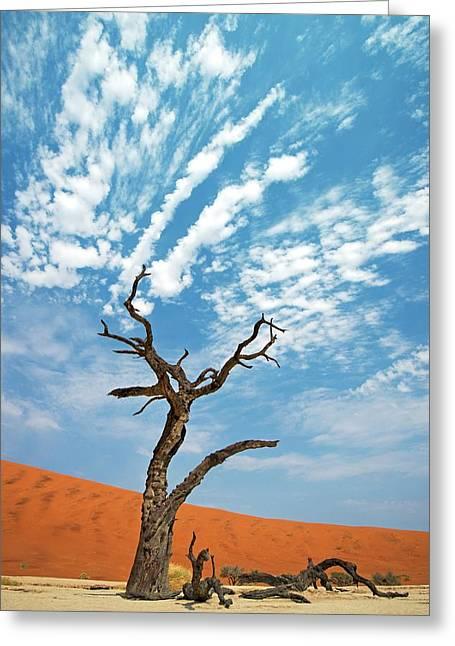 Dead Vlei In Namib-naukluft National Park Greeting Card by Tony Camacho