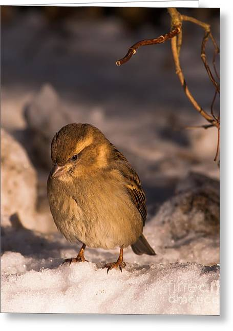 Greeting Card featuring the photograph Deep In Thought by Rose-Maries Pictures