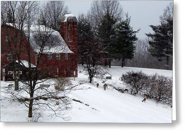 Deer Feeding Below The Barn Greeting Card by Willy  Nelson