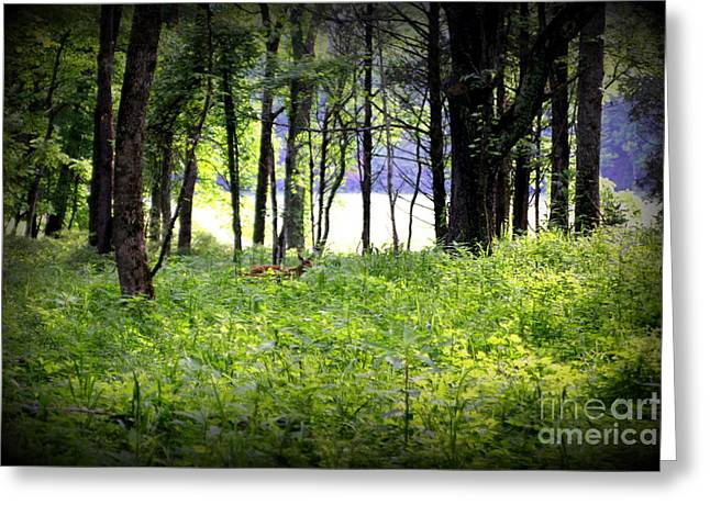 The Deer In A Secret Glade Cades Cove Greeting Card