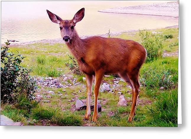 Deer Visit Greeting Card