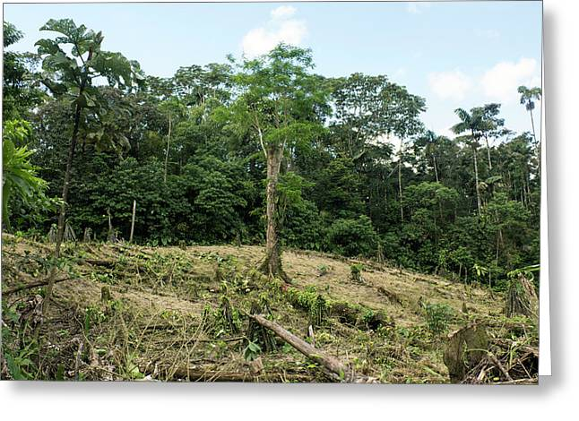 Deforestation In The Ecuadorian Amazon Greeting Card by Dr Morley Read
