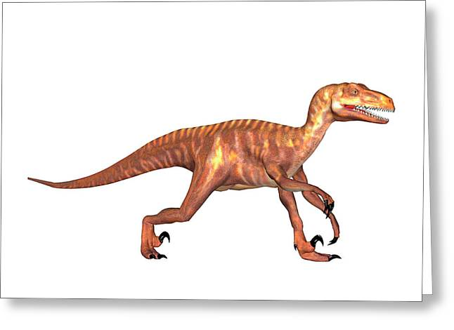 Deinonychus Dinosaur Greeting Card by Friedrich Saurer