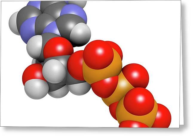 Deoxyadenosine Triphosphate Molecule Greeting Card by Molekuul