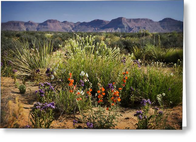 Desert Wildflowers Greeting Card by Saija  Lehtonen